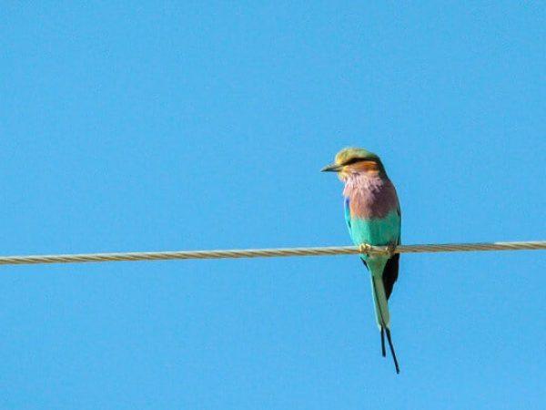 ציפור עם בטחון מסתכלת על מציאות משתנה