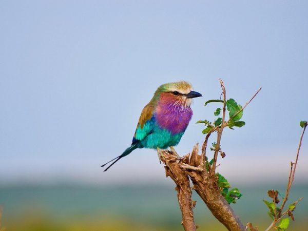 בטחון: ציפור יושבת על ענף רעוע, בבטחון שהיא יכולה לפרוס כנפיים ולעוף