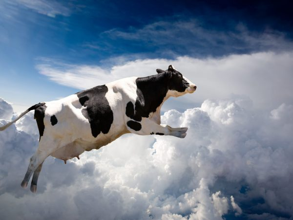 A super cow flying over clouds - cow in flight