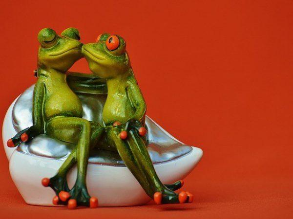 זוג צפרדעים מאוהבים